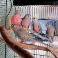 2020-08-02 (6) всё семейство, птенцам 2 месяца.JPG